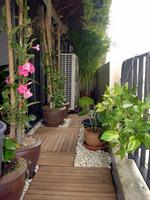 balcony_plants.jpg