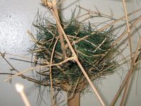 bird_nest.jpg