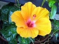 new_flower.jpg